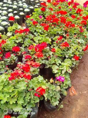 Flowers & Plants for Sale image 1