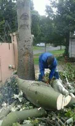 Best Tree Felling,Cutting,Pruning,Trimming & Removal Professionals.Get a Free Quote.