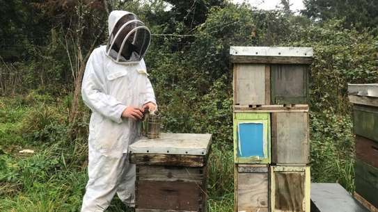 Beekeeping Services Meru   Make an impact. Bring bees to your backyard. image 3