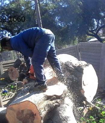 24 HR Emergency Tree cutting/Tree Removal/Tree Pruning/ Fast & affordable image 15