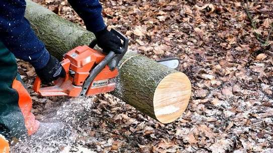 TREE  CUTTING SERVICES - Competitive Tree Felling and timber cutting.Call And Get Free Quote Now. image 3