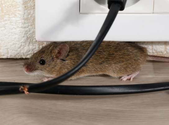 Best Pest Control (Bedbugs, Insects, Rodents, Termites) Professionals Nairobi image 13