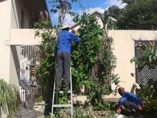 Tree Cutting & Removal.Fast, Professional And Affordable.Landscaping & Gardening Services image 5