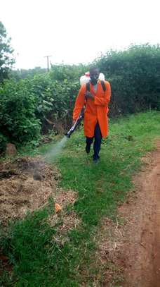 ELLA BEDBUGS ,COCKROACHES & MOSQUITOES CONTROL & FUMIGATION SERVICES IN MLOLONGO. image 4