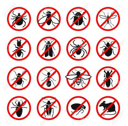 Trusted & Vetted Bed Bug Removal Professionals.Call Now image 5