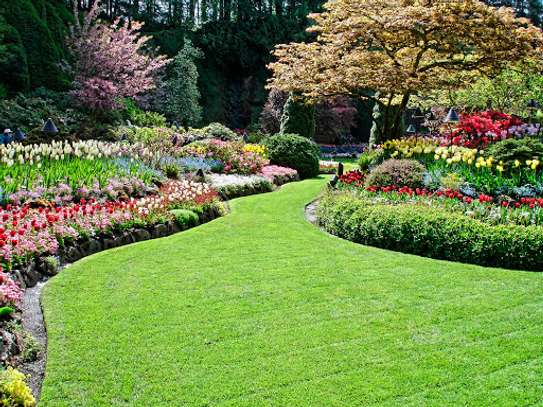 Looking For Vetted  & Trusted Garden Maintenance Specialists in Nairobi ? Free Quote & advice . image 11