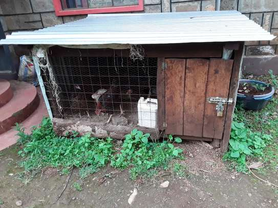 Chiken cages