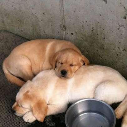 Karimz Pet Shop image 24