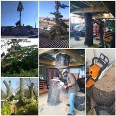 Bestcare Tree Services – Tree felling & Tree Cutting Company image 3