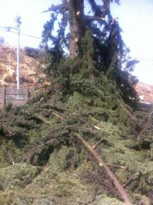 Tree Felling Services image 1