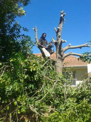 24 HR Emergency Tree cutting/Tree Removal/Tree Pruning/ Fast & affordable image 13