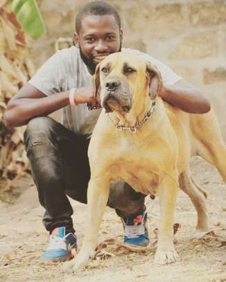 Dog Walking Service Professionals in Nairobi.Trusted & Affordable. Free Quote