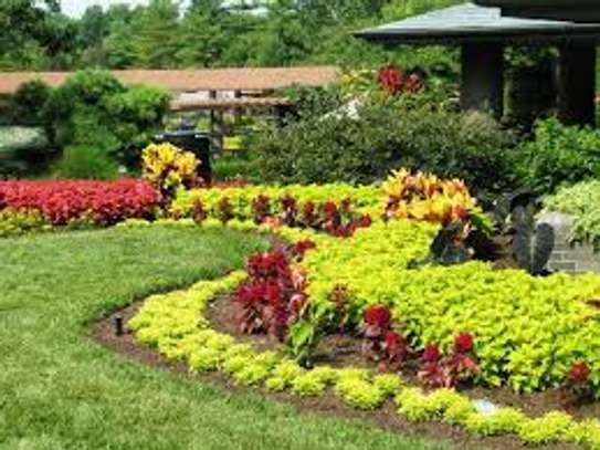 Garden Maintenance, Water Features, Potted Plants & Landscaping Services image 3