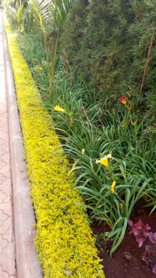 Landscaping(Commercial &  Residential image 2