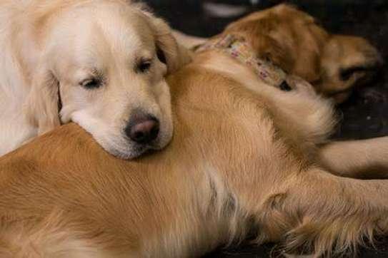 Karimz Pet Shop image 23