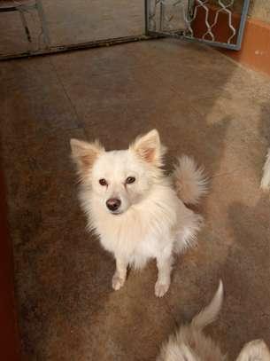 Chihuahua love image 1