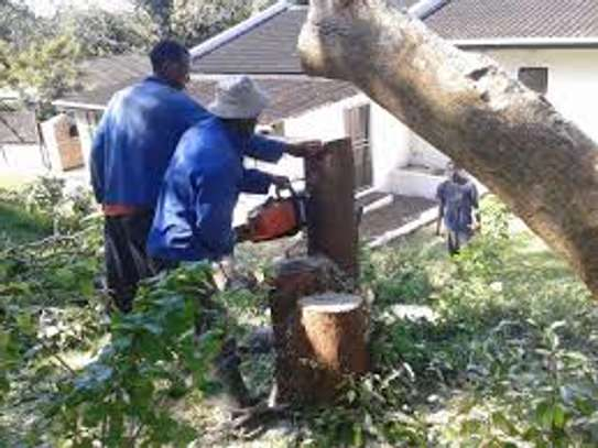 Tree Felling, Stump Removal, Bush Pruning, Trimming and Site Clearing image 5