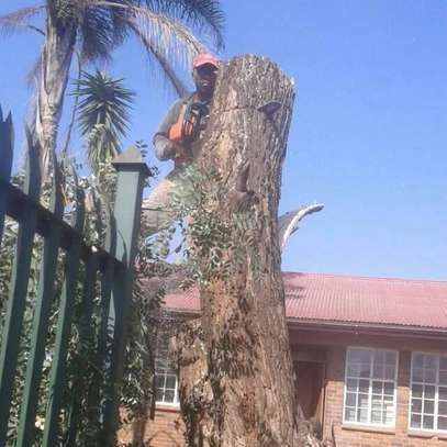 24/7 Emergency Tree Removal Service- Tree Pruning & Trimming.Get a Free Quote Now.