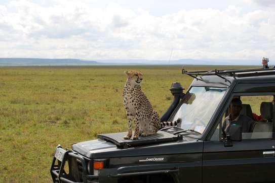 3 days Maasai Mara Bush Safari