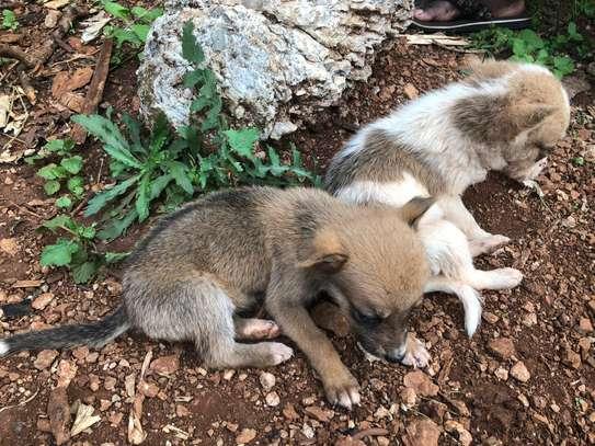 Puppies image 3