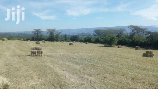 1000 BALES OF  HAY AVAILABLE FOR SALE(BHOMA RHODES) image 3