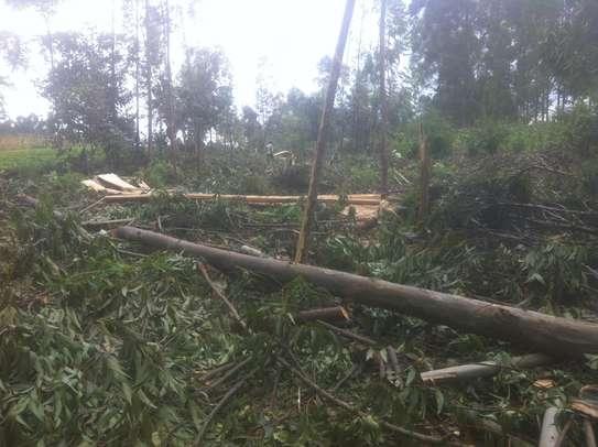 Tree felling/ frame making image 8