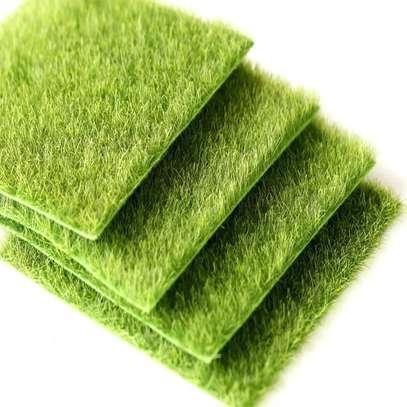 Turf Grass image 5