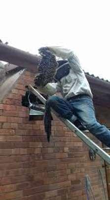 Beekeeping Services Meru   Make an impact. Bring bees to your backyard. image 2