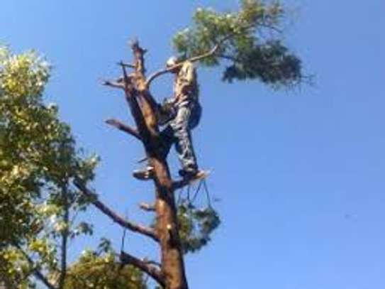 Best Tree Cutting & Trimming, Rubble Removal and Clearing.