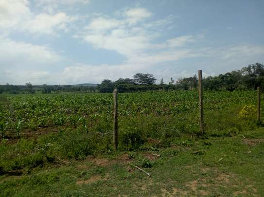 1acre land for sale in Naivasha image 4