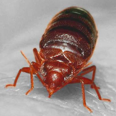 Best Pest Control (Bedbugs, Insects, Rodents, Termites) Professionals Nairobi image 9