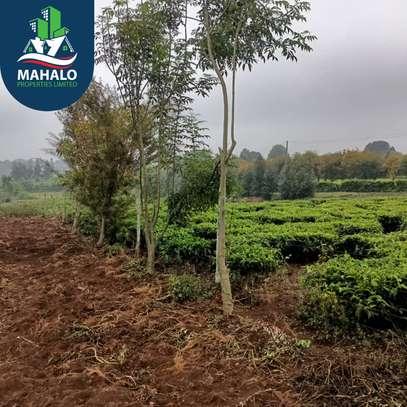 0.5 ac land for sale in Limuru Area image 7