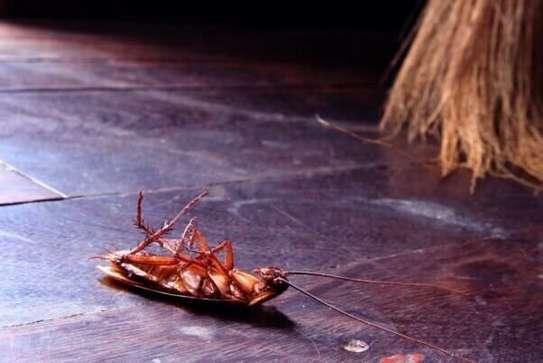Best Bedbug & Cockroach Fumigation - Get Fumigation Now.Guaranteed image 1