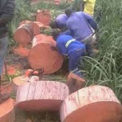 Cheap Tree Cutting Services Nairobi and Surrounding.
