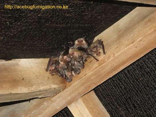 Acebug Fumigation Company image 6