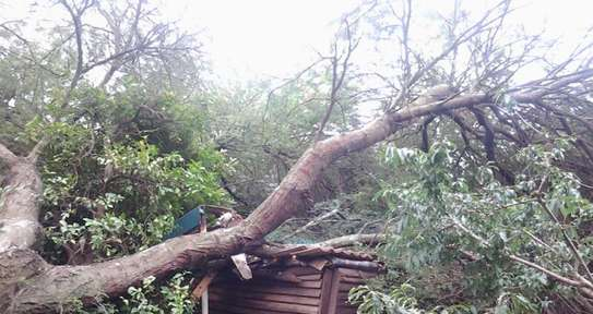 Tree Experts | Tree Removal, Tree Pruning-Free Consultation.Call Now image 2