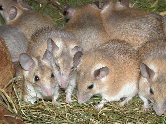 Rodent and Animal Removal Services.Best Quality Guarantee.Call Now.