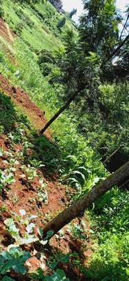 1/2 Hectare land for sale in ruaka with ready title few minutes walk from ruaka stage image 1