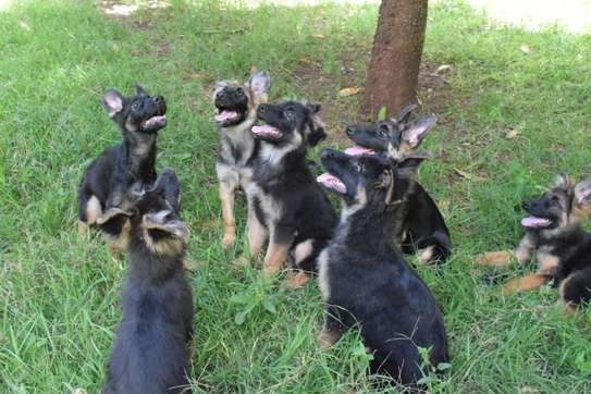 Dog training services - Obedience, House training, Behaviour rehabilitation and Refresher courses.