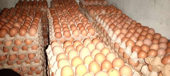FRESH LAYERS EGGS FROM THE FARM