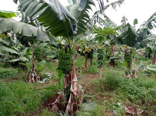 Furnished 1 ac land for sale in Kirinyaga Central image 2