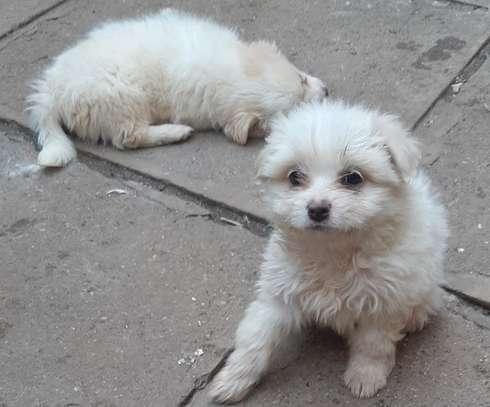 Pet Rehoming Kenya image 5