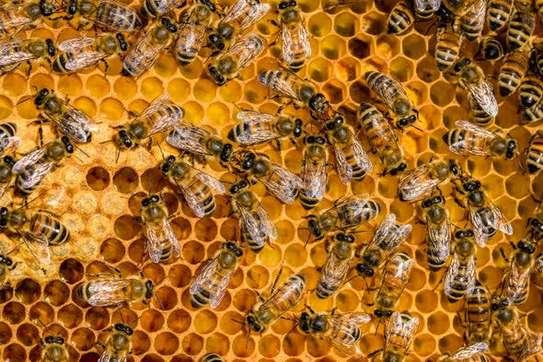 Raw Honey image 5