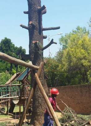 Best Tree Felling, Grass Cutting, Garden Services & rubble removal Grass image 7