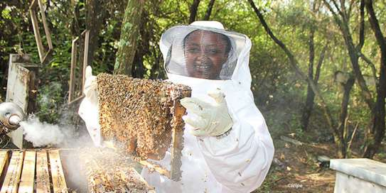 Beekeeping Services Meru   Make an impact. Bring bees to your backyard. image 5