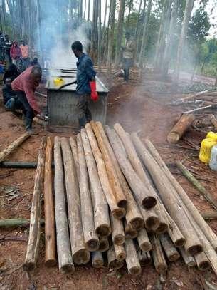 Timber image 1