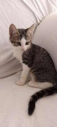 Kittens image 5