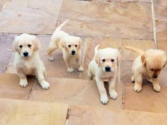 Dogs & Puppies for Sale in Kenya | PigiaMe