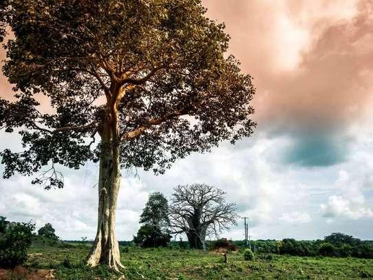 Malindi Town - Residential Land, Land image 8