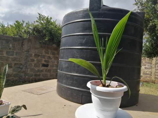 Potted plant image 2